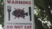 Warning - Contaminated fish