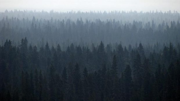 boreal-forest