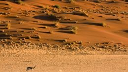 Namibia Desert (Photo by Luca Galuzzi)