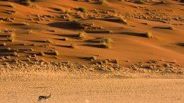 Namibia Desert (Photo by Luca Galuzzi)