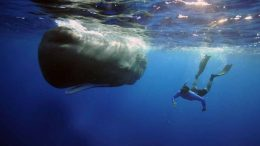 http://theplaidzebra.com/sperm-whales-are-starving-because-their-stomachs-are-full-of-plastic/