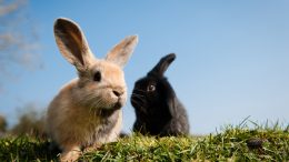 Rabbits are pet worth considering, as they leave smaller carbon foot prints than dogs or cats.