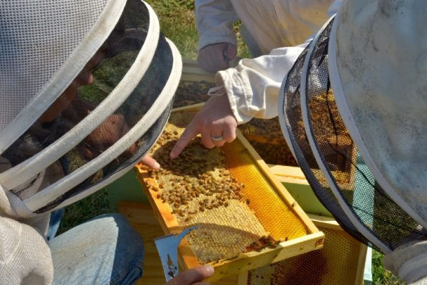 Beekeepers inspect the honeycomb. Source: John Farrell