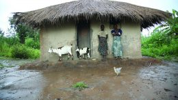 Household takes refuge from the rain in central malawi. Photo credit: ILRI/Stevie Mann