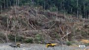 Central Kalimantan, Borneo. Photo credit: Andrew Taylor/WDM