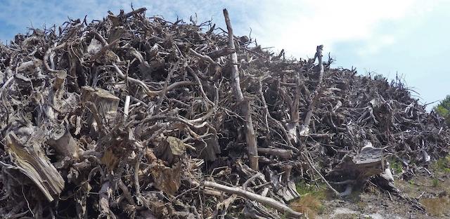 Biomass. Photo credit: Lamiot