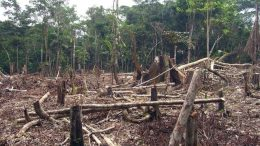 Deforestation is among the human activities which threaten to lead to another, more deadly pandemic, scientists say. (Photo: Matt Zimmerman/flickr/cc)