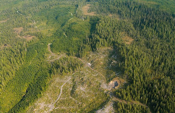 Recently clearcut section on the Tongass National Forest adjacent to older clearcuts in early seral stages in August 2010. Creative Commons photo by Alan Wu.
