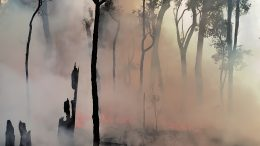 Imaggeo - European Geosciences Union Imaggeo - Smoke clears after an experimental wildfire in Australian eucalyptus forest